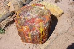 Petrified Forest  021