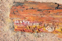 Petrified Forest  023