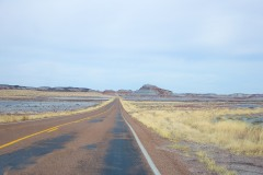 Petrified Forest  029