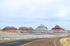 Petrified Forest  032
