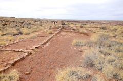Petrified Forest  037