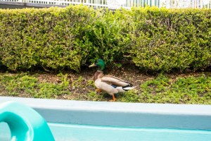 Disneyland DCA 2015-6538